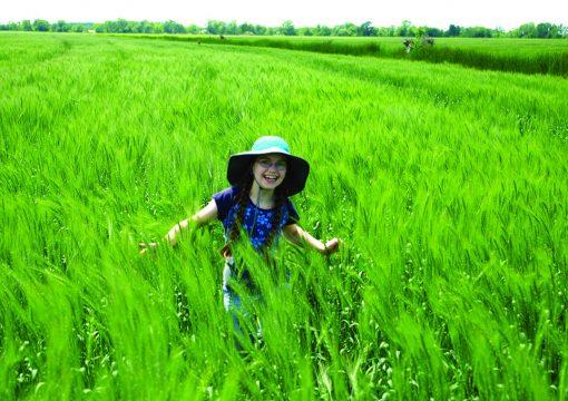 Le Ministère de l'environnement a donné raison aux Céréaliers du Québec et a modifié sa réglementation sur les pesticides!