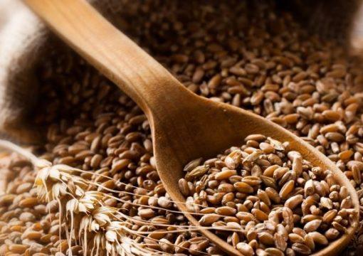 Maintenir la liberté des producteurs de vendre leurs grains