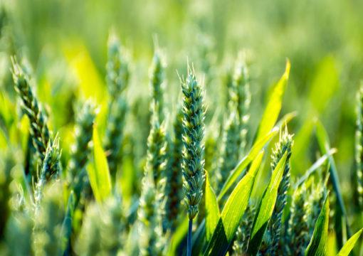Projet de règlement modifiant le Code de gestion des pesticides : Mémoire